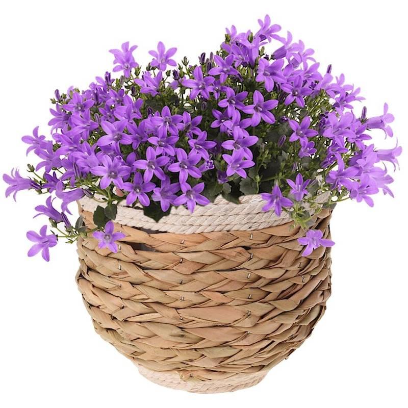 Doniczka, osłonka pleciona, na kwiaty, rośliny, 20x17 cm